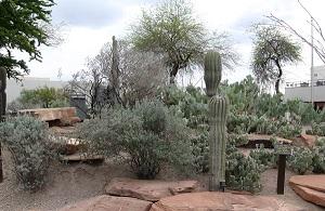 Take a break from the turmoil of NAB at the nearby Xeric Gardens of UNLV, where cactus and native animals thrive